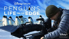 Life on the Edge: Penguins Behind the Scenes
