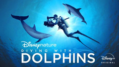 Diving With Dolphins: Dolphin Reef Behind the Scenes